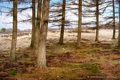 Trees (sebastiaan.dewolf) Tags: nature veluwe 6d