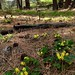 Camp Polk Meadow Preserve