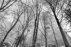 Neuschwanstein Castle (ADreamingOgre) Tags: fog germany munich neuschwanstein castel d5300