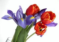 Irises & Tulips (Karen_Chappell) Tags: flowers iris stilllife orange white flower green nature floral spring purple tulip