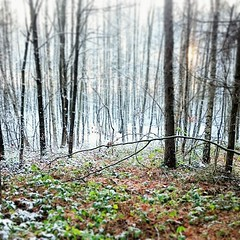 Untitled. 2015_t.t.a.b. - #winter #season has... (Tomski TTABOGRAPHY) Tags: winter white snow green forest season walks frost secret first poland spot ano panatom tomski ttab treemagic uploaded:by=flickstagram igerspoland igerseurope instagram:photo=11254208679359308431484642177 klobuckcounty ttabography anoprojekt panatommedia