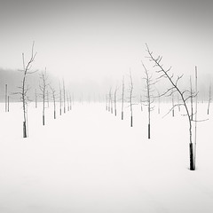 Row Dance (Vesa Pihanurmi) Tags: trees winter blackandwhite snow nature monochrome misty fog finland helsinki minimalism saplings