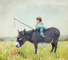 It's all about preference! (rubyblossom.) Tags: flowers boy sky child basket ride meadow donkey carrot fields stick apples preference 2016 rubyblossom rubystreasurechallenge63