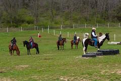 DSCF0315.jpg (Ed Traywick) Tags: horses horse leo robyn obstacles horseclinic