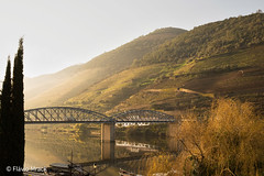 Douro river slopes in the early morning, Pinho, Portugal (Flvio Photography) Tags: portugal europa pt ano viseu 2013 ervedosadodouro