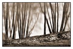 Dreamland (Bernd Kretzer) Tags: trees reflection ed blackwhite nikon nikkor schwarzweiss reflexion bume spiegelung vr afs dx 14556g 55300mm