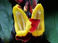 Flower (Hugo von Schreck) Tags: flower blume blte onlythebestofnature tamron28300mmf3563divcpzda010 canoneos5dsr hugovonschreck