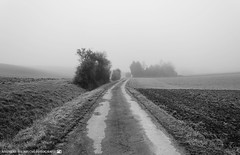 On a foggy Morning in early March 2. (andreasheinrich) Tags: morning blackandwhite cold misty fog germany landscape deutschland march nebel path felder fields kalt landschaft morgen mrz weg badenwrttemberg blackandwhitephotos neckarsulm neblig schwarzweis nikond7000