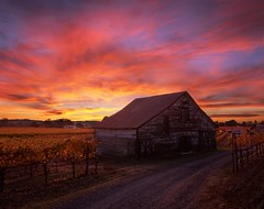 Vineyard Dawn Colors (RZ68) Tags: california county old morning sunset sky color fall clouds barn sunrise dawn bay big san francisco angle wine good no country rustic sonoma wide velvia area provia vinyard rz67 e100