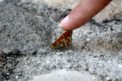 Touching (VoyagerX) Tags: butterfly finger touch farfalla dito