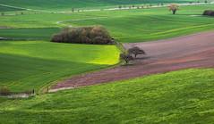 Variations in Green (Ralf Pelkmann) Tags: trees green spring wetterau