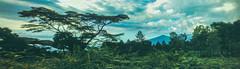 (aljar3d) Tags: trees summer sky mountain cold green nature clouds climb mt hiking earth farm hike trail silay patag mandalagan
