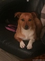 [Reunited] Mon, May 2nd, 2016 Found Female Dog - Kilworth Road, Drimnagh, Dublin 12 (Lost and Found Pets Ireland) Tags: road dublin dog found may 2016 kilworth founddogkilworthroaddublin