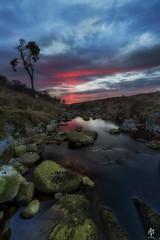 Sunset... (fearghal breathnach) Tags: longexposure ireland sunset portrait color tree water silhouette river landscape dusk wideangle wicklow lonetree lonelytree sallygap coronationplantation