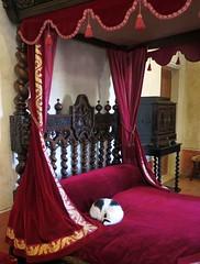 A sleeping beauty on Leonardo Da Vinci's bed... (Sokleine) Tags: sleeping france castle heritage cat bed bedroom chat furniture lit 37 vinci chteau renaissance amboise leonardodavinci mobilier touraine indreetloire centrevaldeloire closluc