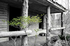 Life Goes On (cwhitted) Tags: abandoned minolta samsung 24mm chathamcounty rokkor selectivecoloring minoltamd rokkorx nx30 minoltamdwrokkorx24mmf28 samsungnx30