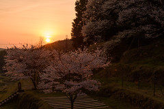 35Butsuryuji Temple (anglo10) Tags: sunset japan cherry temple