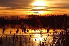 winter sunset (JoannaRB2009) Tags: winter sunset sky sun reed nature water reflections landscape pond colours view poland polska lowersilesia dolnyśląsk dolinabaryczy miliczponds