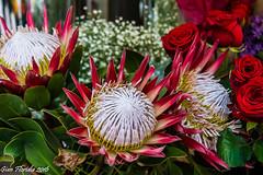 Un grazie a chi visita e commenta le mie immagini (Gian Floridia) Tags: flowers thankyou fiori grazie