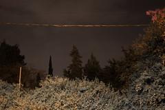 Night (Romeo Alaeff) Tags: trees night israel telaviv spooky powerlines