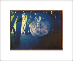 Matter of Time (art y fotos) Tags: trees film mediumformat polaroid hawaii oahu handmade roots bamboo pinhole pack homemade mangrove familytree instant fujifilm toycameras clocks bambole multipleexposures debonair 2016 colorpack wppd worldwidepinholephotographyday fpp peelapart waiahole fp100c fujifp100cfilm 325x425 filmphotographypodcast bamboopinholecamera filmphotographyproject plasticfilmtastic120 fppdebonair filmtasticplasticpackastic lebambolemkix pindeboroid
