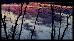 Where Is There To Go? (mazzmn) Tags: morning pink blue trees lake reflection water silhouette clouds sunrise spring purple branches border ducks peaceful lookingdown oudoors htmt