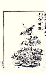 Heavenly bamboo and brown-eared bulbul (Japanese Flower and Bird Art) Tags: flower bird art japan japanese book picture bamboo heavenly kano woodblock domestica nandina nishimura bulbul berberidaceae browneared ixos pycnonotidae amaurotis shigenaga readercollection tsunenobu