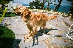 Dog (ondahlmusic) Tags: sea dog animal lomo lca lomography agfavista200