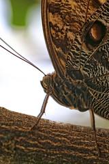 Close-up (Andy von der Wurm) Tags: nature animal closeup fauna butterfly germany insect deutschland europa europe alemania nrw tierpark mariposa insekt allemagne nordrheinwestfalen nahaufnahme tier schmetterling vlinder dierenpark northrhinewestfalia hobbyphotograph krefelderzoo andreasfucke andyvonderwurm