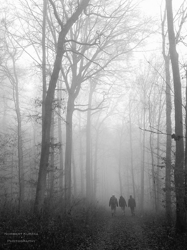 foggy new years walk
