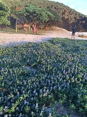 IMG_3497 (elleica) Tags: summer vacation beach islands whitebeach daet camarinesnorte calaguasislands