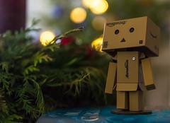 IMG_9541 (Fotodave42) Tags: christmas  danbo