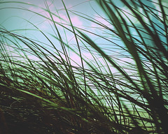028   366   V {explore} (Randomographer) Tags: sky plant nature grass lines clouds cross bend wind grow 28 alive growing bent processed blown lean 366 project366