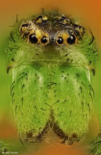 corona de ojos
