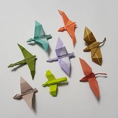 John Montroll's pterosaurs (j0igami) Tags: square origami squareformat jurassicpark pterodactyl pterosaur pteranodon johnmontroll iphoneography instagramapp jurassicworld