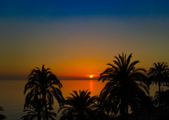 Palms at sunset (Steve-h) Tags: blue winter sunset sea espaa orange black nature colors reflections palms spain mediterranean december colours sundown silhouettes andalucia costadelsol andalusia malaga allrightsreserved marbella 2015 steveh appleiphone6s