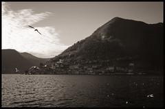 Fin de journe (E Starck) Tags: white lake black landscape lago italia lac olympus panasonic monte paysage italie isola iseo m43 em5