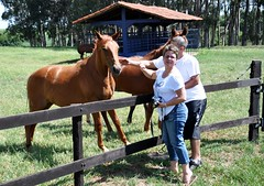 Portrait's Day FLICKR Brazil (Ruby Ferreira ) Tags: trees horses self fence passion cavalos nikond90 harasbighorse