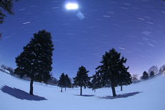 The Silhouetted Pines and the Full Moon (Radical Retinoscopy) Tags: nightphotography trees moon snow silhouette pine lowlight wideangle fullmoon fisheye astrophotography lancaster astronomy nightsky lancastercounty blizzard lunar startrail canon815mm starstax