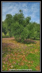 # # #_ # #_ # # # # #5 #__5 # #  #Jordan #amman #um_abhara #marj_alhamam #marj_al_hamam #mobilography #phonography #galaxy_note5 #galaxy_note_5 #nature #green #spring #flower #flowers (alrayes1977) Tags: flowers flower green nature photography spring amman jordan myphoto   mobilography      phonography  marjalhamam galaxynote5 5  umabhara   5