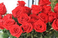 rosas rojas (javierortegaferrandez) Tags: planta flor ramo