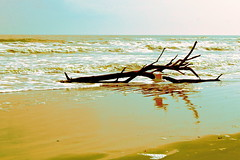 Sand and Surf (West Beach Sunset) Tags: winter seascape bird art beach gulfofmexico nature water canon eos seaside log sand surf waves view seagull tide shoreline january driftwood watersedge seashore gulfcoast seawater texasgulfcoast lv006 coastalphotos eosrebelt1i