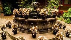 Flor flor flor (shiscoco) Tags: flores mexico arquitectura agua flor pueblo fuente magico zacatlan