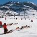 Alpe d'Huez Dog Sleds