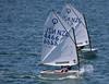 IMG_0988.jpg (Samej) Tags: newzealand sailing nz wellington regatta optimist wellingtonharbour worserbay 4466 wbbc