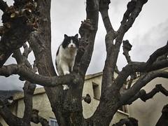 Chat prenant de la hauteur (Kwalestafar) Tags: cat chat meow gatto matou flin gattino hauteur miaou
