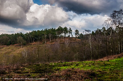 LeithHill_DSC6869 (Nick Woods Photography) Tags: trees cloud tree clouds landscape view cloudy nt horizon greenery treeline nationaltrust cloudysky leithhill surreyhills leithhilltower surreyview