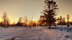 Fagnes - 11 (Ld\/) Tags: winter sunset mars snow nature beauty belgium belgique belgie ardennen ardennes eifel 23 venn hoge malmedy hautes fagnes wallonie hautesfagnes 2016 ardenne rgion venen hohes waimes rserve jalhay