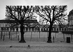 Geometric trees (Scossadream) Tags: roof tower castle geometric church window nature lines river denmark graffiti nyhavn gate lego sweden borg gothic tunnel balticsea spacemonkey sverige christiana shape malm greenhouses kbenhavn littlemermaid stpeter resund smp copenaghen amalienborg 2016 svezia danimarca scossa slottsmllan d7100 guizzardi lucaguizzardi spacemonkeypictures nikond7100