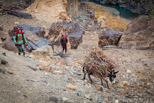 Osiołki znoszące drewno na opoał